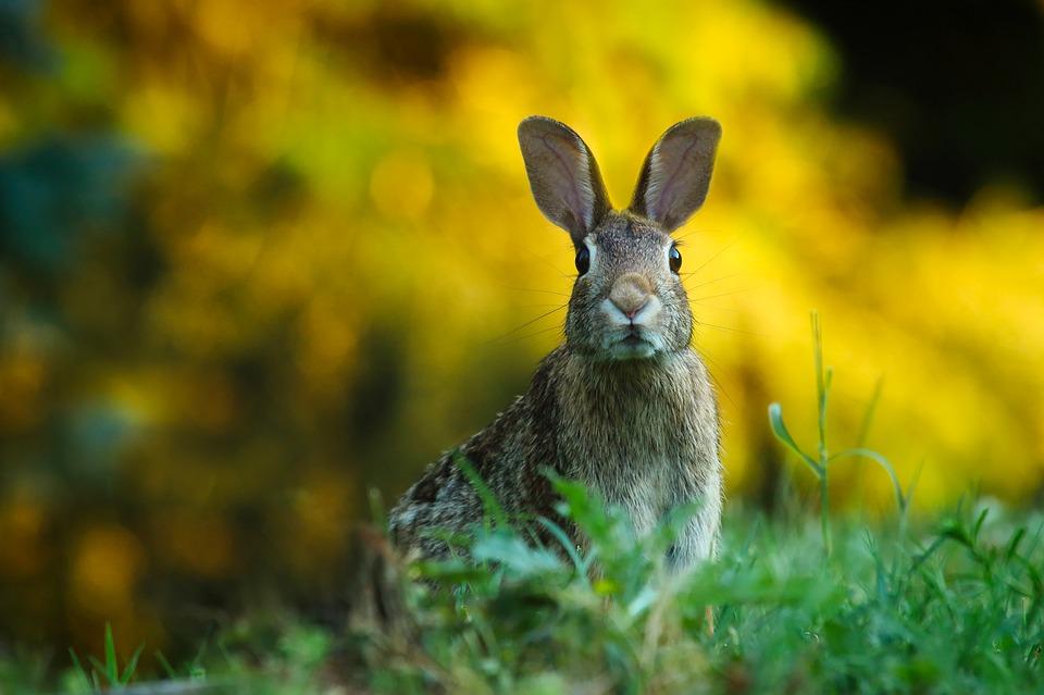 conejo en libertad