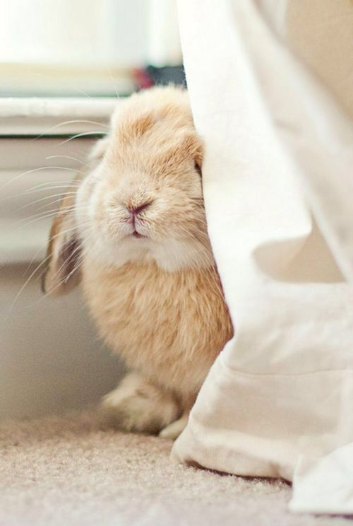 conejo escondite