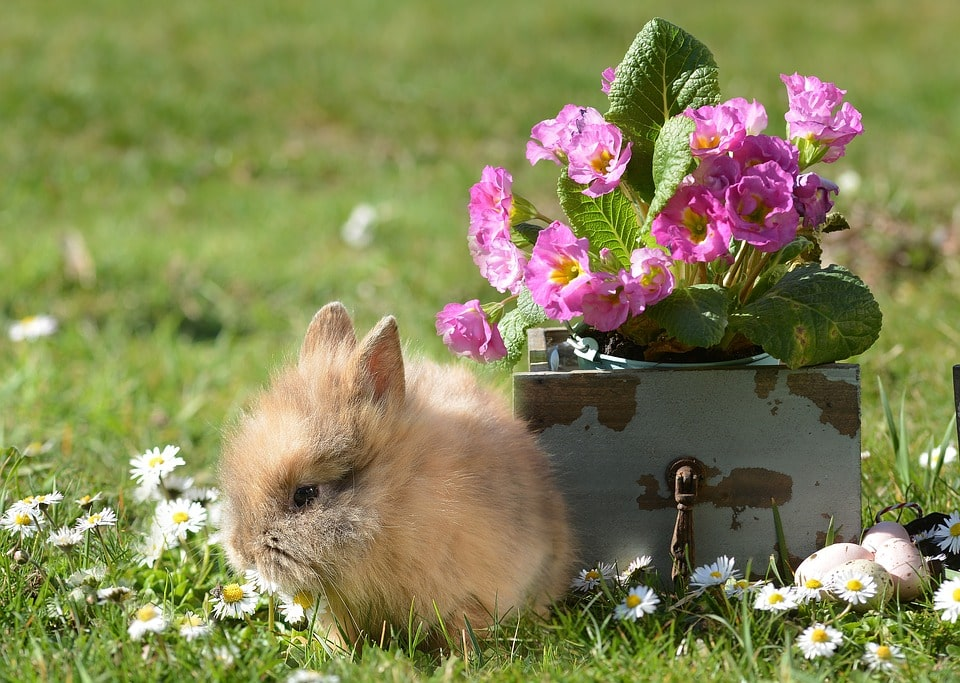 conejo y flores