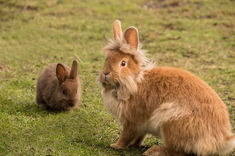 conejos en el campo