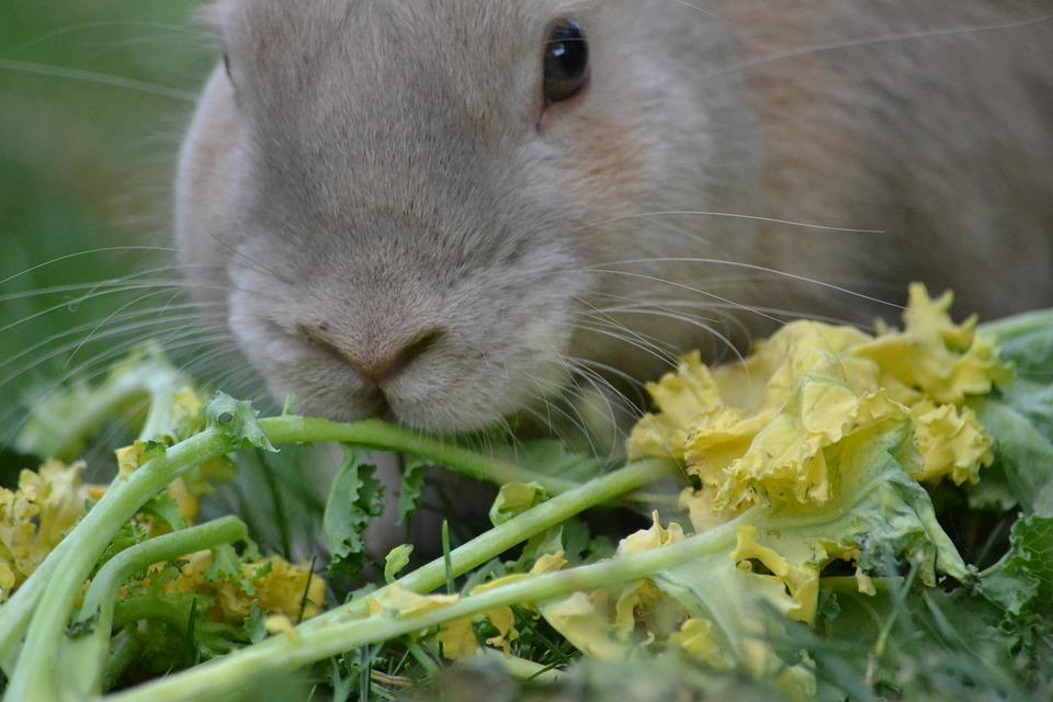 comiendo plantas