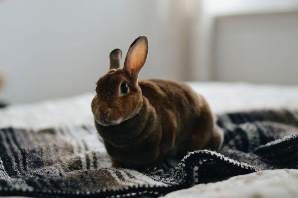 conejo en una cama