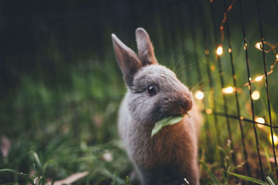 conejo luces