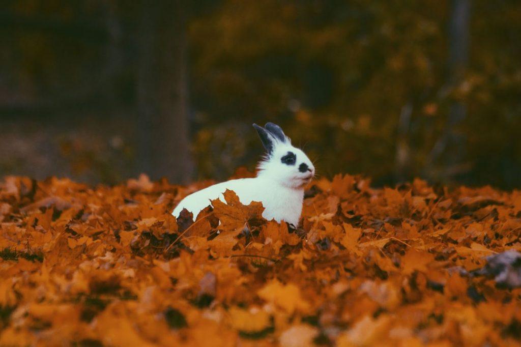 conejo otoño