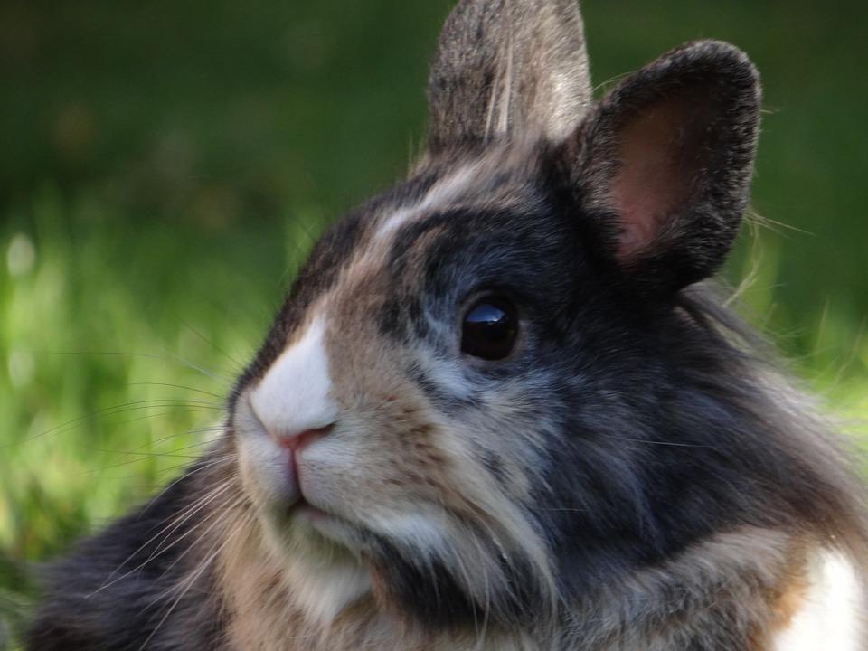 conejo primer plano